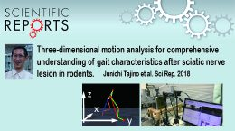 Analyzing locomotion of sciatic nerve injury model of rats by applying three-dimensional motion capture system.