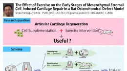 Exercise in combination with Cell Therapy on Articular Cartilage Regeneration